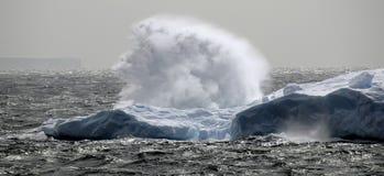 antarcticsvallvåg arkivbilder