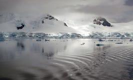 Antarctische bezinning Stock Fotografie