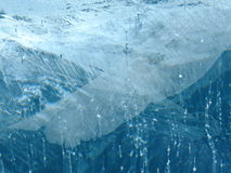Antarctische ijswonder 2014 #4 bevroren vleugel Stock Afbeeldingen