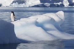 Antarctische kust stock fotografie