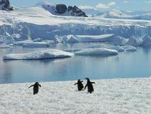 Antarctische pinguïngroep Stock Foto