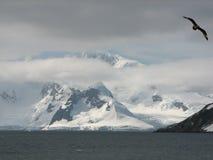 Antarctische Vlucht Stock Afbeeldingen