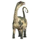 Antarctosaurus över vit Arkivfoton