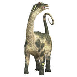Antarctosaurus über Weiß Stockfotos