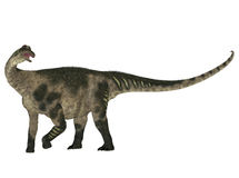 Antarctosaurus Stock Photo