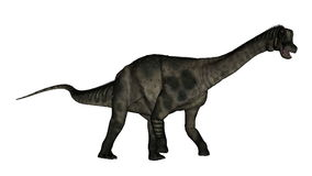 Antarctosaurus dinosaur - 3D render. Antarctosaurus dinosaur walking and roaring isolated in white background - 3D render stock illustration