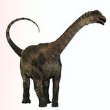 Antarctosaurus Profile Royalty Free Stock Photos