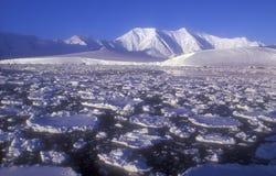Antarktis Royaltyfri Bild