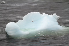 Antarktis - isberg Arkivbilder