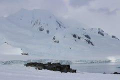 Antarktis - landskap Royaltyfri Bild
