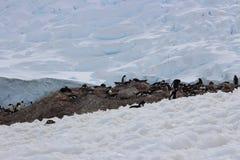 Antarktis - pingvin Arkivbild