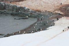 Antarktis - pingvin Royaltyfria Foton