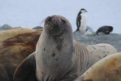 Antarktis - skyddsremsor Arkivfoton