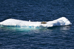 Antarktis - skyddsremsor på en isisflak Fotografering för Bildbyråer