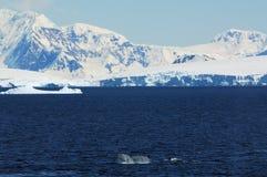 Antarktischer Kontinent stockbilder