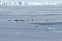 Antarktisches Eis und Pinguine Adeli stockfoto