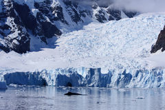 Antarktishamnparadis Royaltyfri Bild