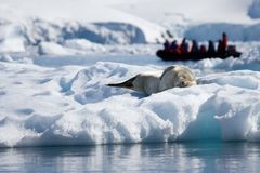 Antarktislivstidsskyddsremsa Arkivfoto