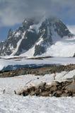 Antarktisöpetermann Arkivfoto