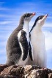 Antarktispingvin Royaltyfria Foton
