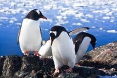 Antarktispingvin Royaltyfri Fotografi