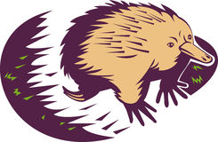 Anteater épineux ou echidna Illustration Stock