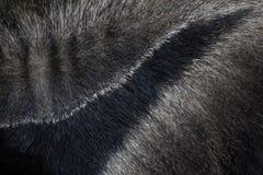 anteater γιγαντιαίο tridactyla myrmecophaga άνευ ραφής σύσταση δερμάτων tileable Στοκ Φωτογραφία
