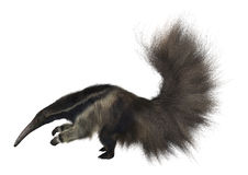 anteater γιγαντιαίο watercolor χεριών σχεδίων Στοκ Φωτογραφία