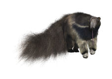 anteater γιγαντιαίο watercolor χεριών σχεδίων Στοκ φωτογραφία με δικαίωμα ελεύθερης χρήσης