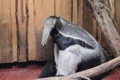 anteater γιγαντιαίο watercolor χεριών σχεδίων Στοκ εικόνες με δικαίωμα ελεύθερης χρήσης