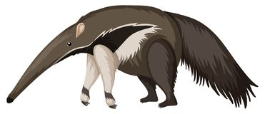 Anteater στο άσπρο υπόβαθρο ελεύθερη απεικόνιση δικαιώματος