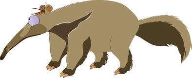 Anteater Stock Image