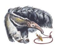 Anteater géant Image libre de droits
