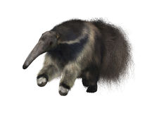 Anteater géant Photographie stock