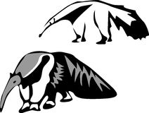 Anteater Stock Images