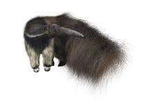 anteater rysunkowa gigantyczna ręki akwarela Fotografia Stock