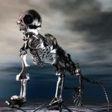 Anteater Skeleton Stock Photography