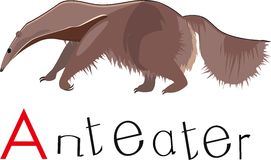 Anteater with title Stock Photography