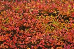 Antecedentes abstractos: Autumn Leaves fotografía de archivo