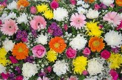 Antecedentes completos de la flora Imagenes de archivo