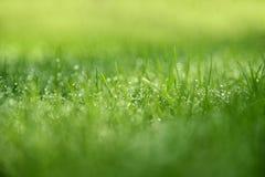 Antecedentes de la hierba: Hierba verde abstracta del fondo natural con un bokeh hermoso Foto de archivo libre de regalías