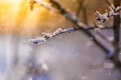 Antecedentes de la naturaleza del invierno Luz del sol suave y nieve fría del detalle del hielo y blanca Fondo perfecto del invie Fotografía de archivo libre de regalías