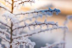 Antecedentes de la naturaleza del invierno Luz del sol suave y nieve fría del detalle del hielo y blanca Fondo perfecto del invie Foto de archivo