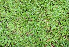 Antecedentes de la textura de la hierba Imágenes de archivo libres de regalías