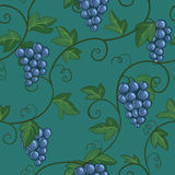 Antecedentes de la uva Fotografía de archivo