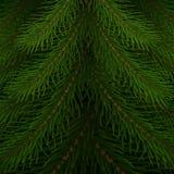 Antecedentes del árbol de navidad Ramas realistas del árbol de abeto Libre Illustration