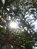 Antecedentes: luz del sol Foto de archivo libre de regalías