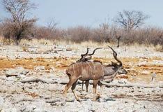 Antelope Stock Image