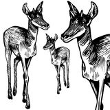 Antelope - black and white Royalty Free Stock Photos