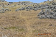 Antelope and deer trail stock photo